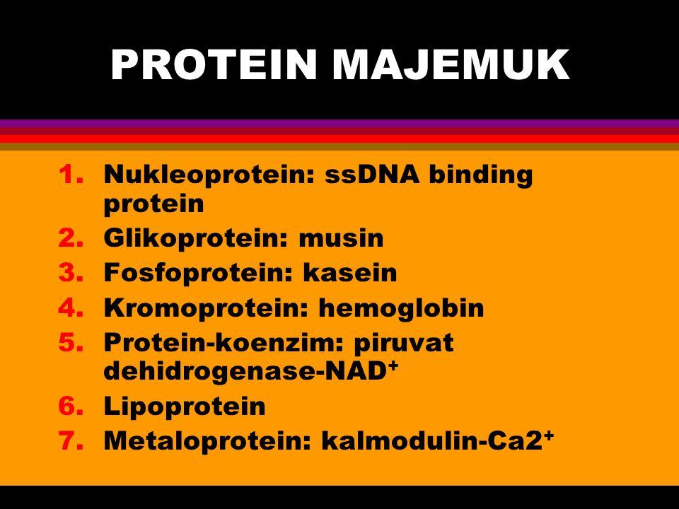 PROTEIN MAJEMUK 1.Nukleoprotein: ssDNA binding protein 2.Glikoprotein: musin 3.Fosfoprotein: kasein 4.Kromoprotein: hemoglobin 5.Protein-koenzim: piru