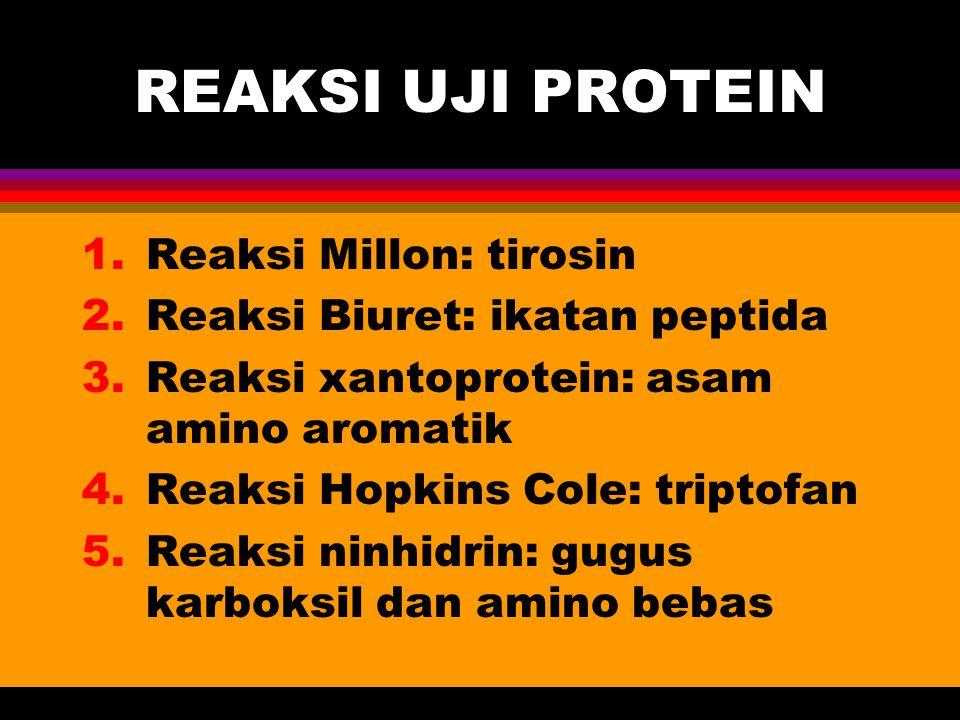 REAKSI UJI PROTEIN 1.Reaksi Millon: tirosin 2.Reaksi Biuret: ikatan peptida 3.Reaksi xantoprotein: asam amino aromatik 4.Reaksi Hopkins Cole: triptofa