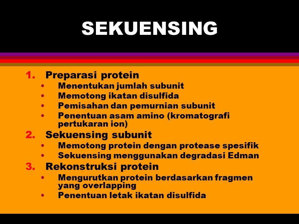 SEKUENSING 1.Preparasi protein Menentukan jumlah subunit Memotong ikatan disulfida Pemisahan dan pemurnian subunit Penentuan asam amino (kromatografi