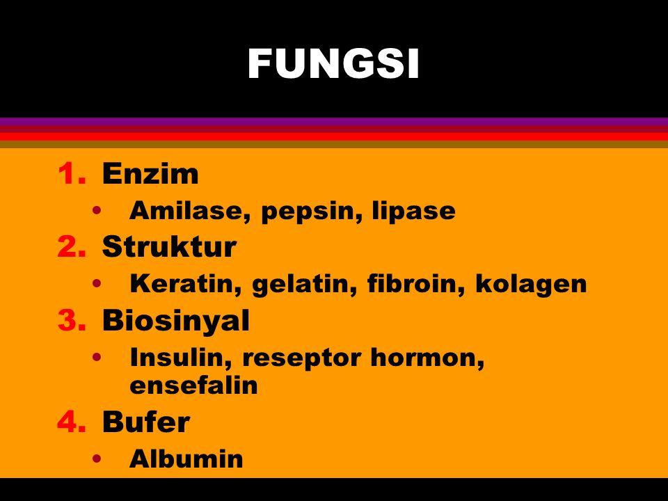 FUNGSI 1.Enzim Amilase, pepsin, lipase 2.Struktur Keratin, gelatin, fibroin, kolagen 3.Biosinyal Insulin, reseptor hormon, ensefalin 4.Bufer Albumin