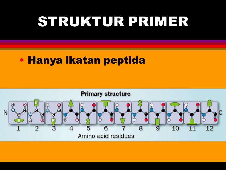 STRUKTUR PRIMER Hanya ikatan peptida