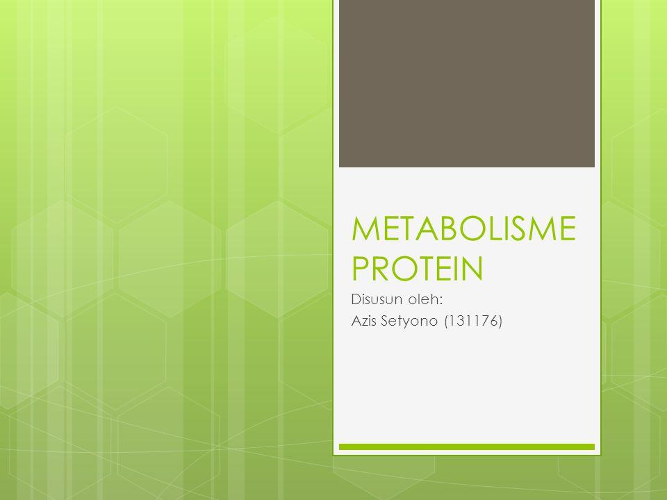 METABOLISME PROTEIN Disusun oleh: Azis Setyono (131176)