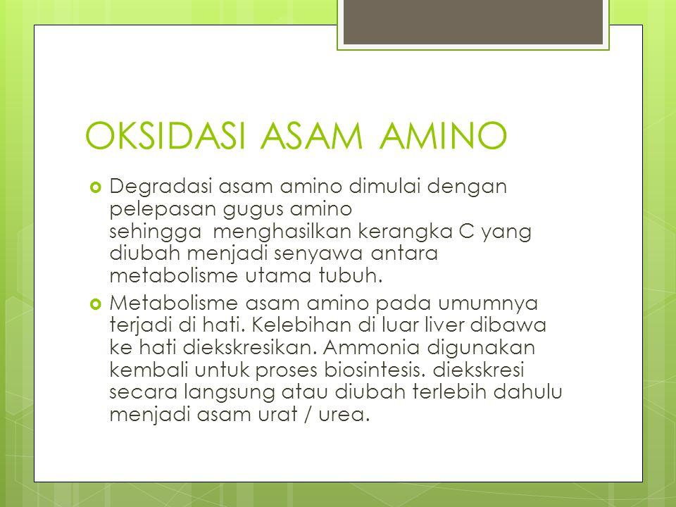 OKSIDASI ASAM AMINO  Degradasi asam amino dimulai dengan pelepasan gugus amino sehingga menghasilkan kerangka C yang diubah menjadi senyawa antara me