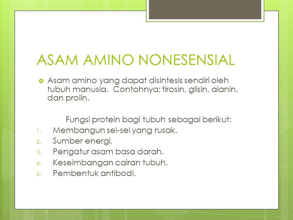 ASAM AMINO NONESENSIAL  Asam amino yang dapat disintesis sendiri oleh tubuh manusia. Contohnya: tirosin, glisin, alanin, dan prolin. Fungsi protein b