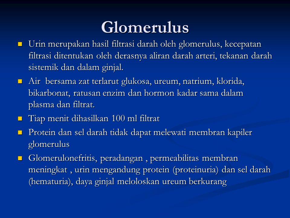 Glomerulus Urin merupakan hasil filtrasi darah oleh glomerulus, kecepatan filtrasi ditentukan oleh derasnya aliran darah arteri, tekanan darah sistemi