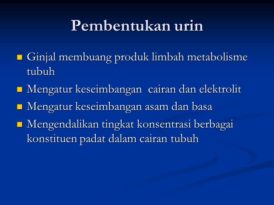 Pembentukan urin Ginjal membuang produk limbah metabolisme tubuh Ginjal membuang produk limbah metabolisme tubuh Mengatur keseimbangan cairan dan elek