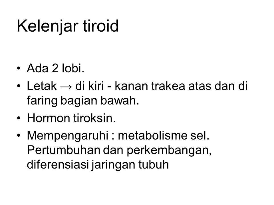 Kelenjar tiroid Ada 2 lobi. Letak → di kiri - kanan trakea atas dan di faring bagian bawah. Hormon tiroksin. Mempengaruhi : metabolisme sel. Pertumbuh