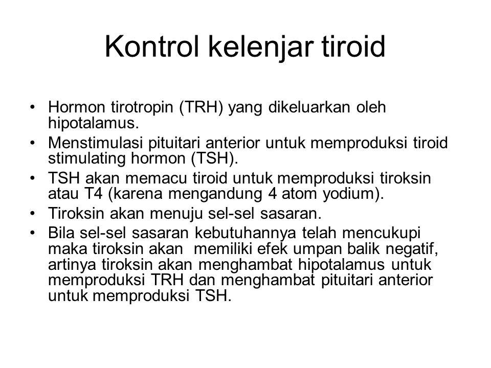 Kontrol kelenjar tiroid Hormon tirotropin (TRH) yang dikeluarkan oleh hipotalamus. Menstimulasi pituitari anterior untuk memproduksi tiroid stimulatin