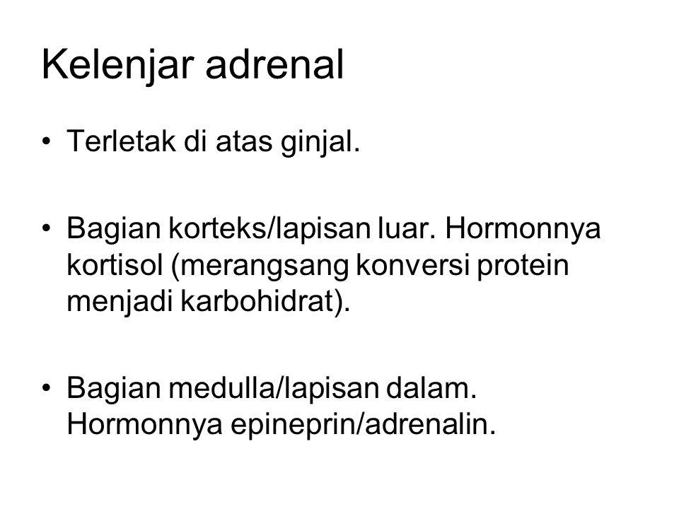 Kelenjar adrenal Terletak di atas ginjal. Bagian korteks/lapisan luar. Hormonnya kortisol (merangsang konversi protein menjadi karbohidrat). Bagian me