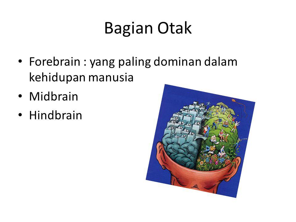 Bagian Otak Forebrain : yang paling dominan dalam kehidupan manusia Midbrain Hindbrain