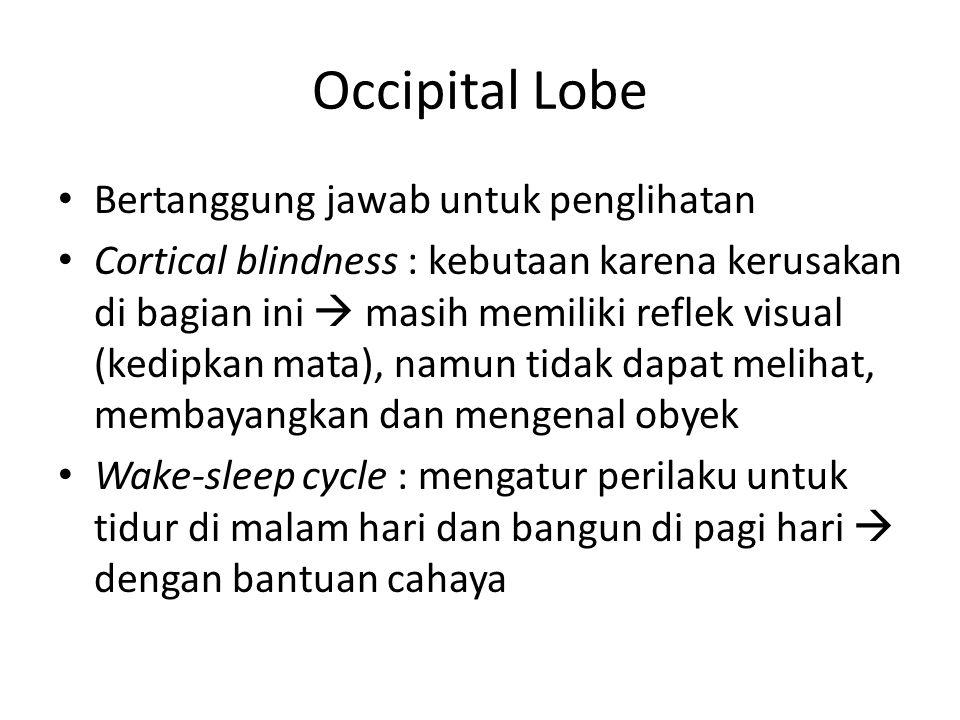 Occipital Lobe Bertanggung jawab untuk penglihatan Cortical blindness : kebutaan karena kerusakan di bagian ini  masih memiliki reflek visual (kedipkan mata), namun tidak dapat melihat, membayangkan dan mengenal obyek Wake-sleep cycle : mengatur perilaku untuk tidur di malam hari dan bangun di pagi hari  dengan bantuan cahaya