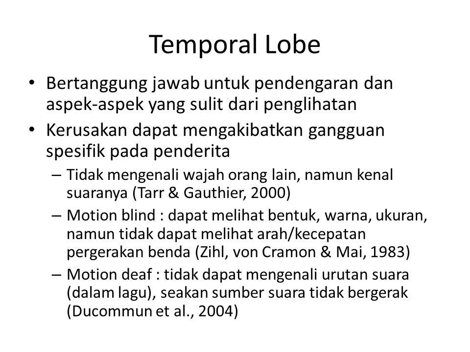 Temporal Lobe Bertanggung jawab untuk pendengaran dan aspek-aspek yang sulit dari penglihatan Kerusakan dapat mengakibatkan gangguan spesifik pada penderita – Tidak mengenali wajah orang lain, namun kenal suaranya (Tarr & Gauthier, 2000) – Motion blind : dapat melihat bentuk, warna, ukuran, namun tidak dapat melihat arah/kecepatan pergerakan benda (Zihl, von Cramon & Mai, 1983) – Motion deaf : tidak dapat mengenali urutan suara (dalam lagu), seakan sumber suara tidak bergerak (Ducommun et al., 2004)