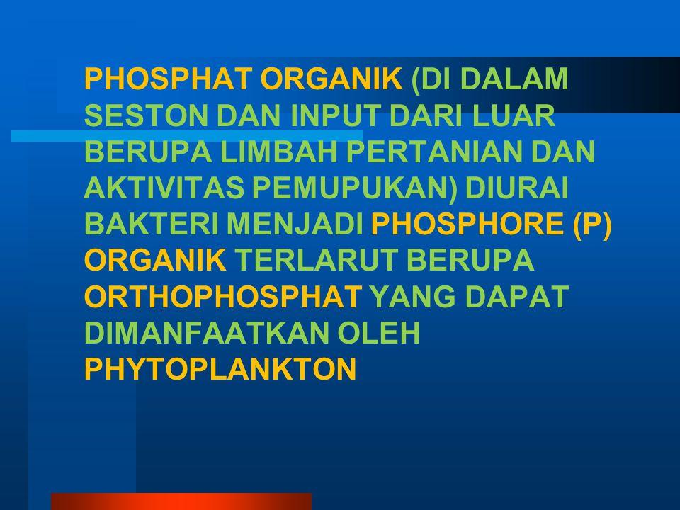 PHOSPHAT ORGANIK (DI DALAM SESTON DAN INPUT DARI LUAR BERUPA LIMBAH PERTANIAN DAN AKTIVITAS PEMUPUKAN) DIURAI BAKTERI MENJADI PHOSPHORE (P) ORGANIK TERLARUT BERUPA ORTHOPHOSPHAT YANG DAPAT DIMANFAATKAN OLEH PHYTOPLANKTON