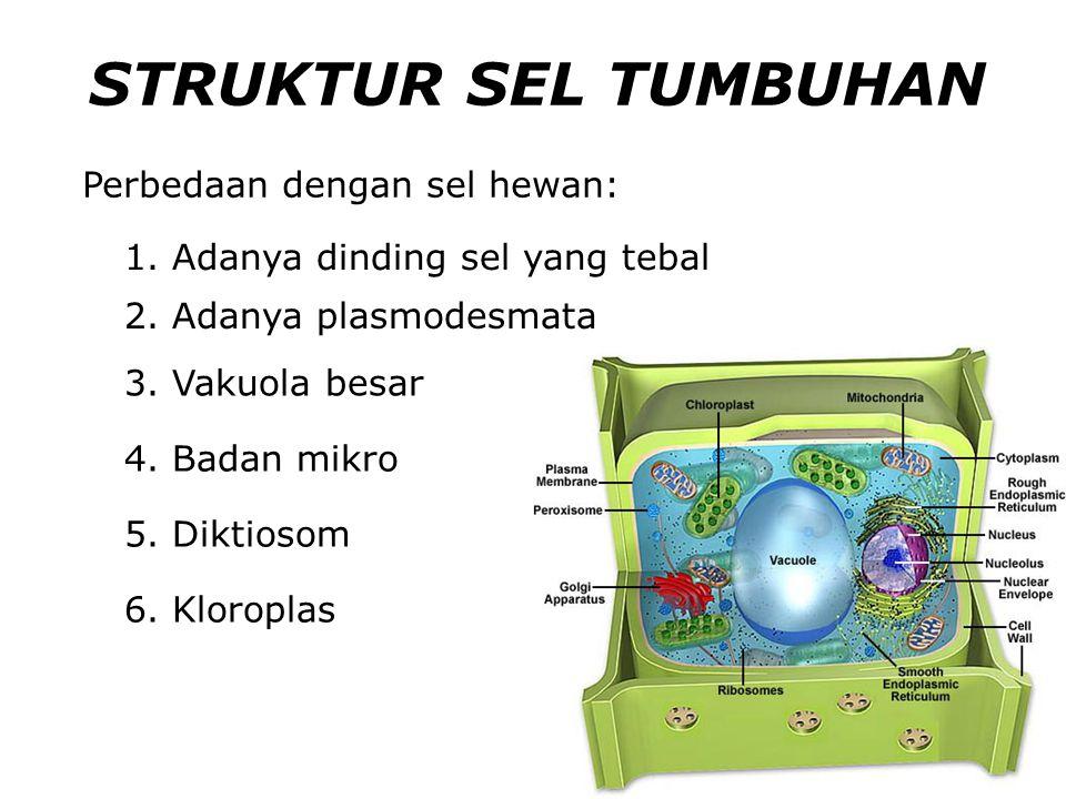 STRUKTUR SEL TUMBUHAN Perbedaan dengan sel hewan: 1.