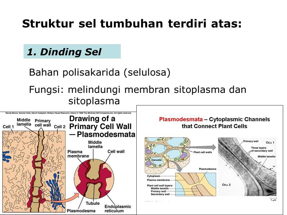 Struktur sel tumbuhan terdiri atas: 1.