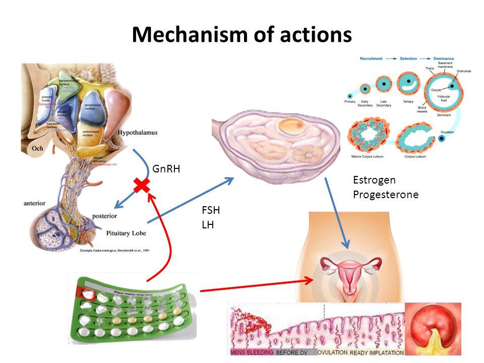 Mechanism of actions GnRH FSH LH Estrogen Progesterone