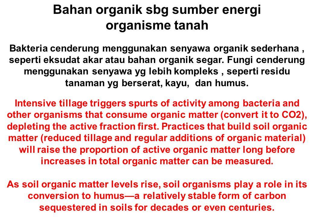 Bahan organik sbg sumber energi organisme tanah Bakteria cenderung menggunakan senyawa organik sederhana, seperti eksudat akar atau bahan organik segar.