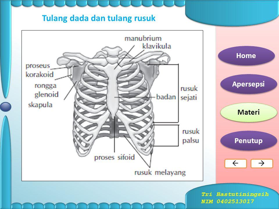Tulang belakang dengan bagian  bagiannya Home Apersepsi Materi Penutup  Tri Hastutiningsih NIM 0402513017