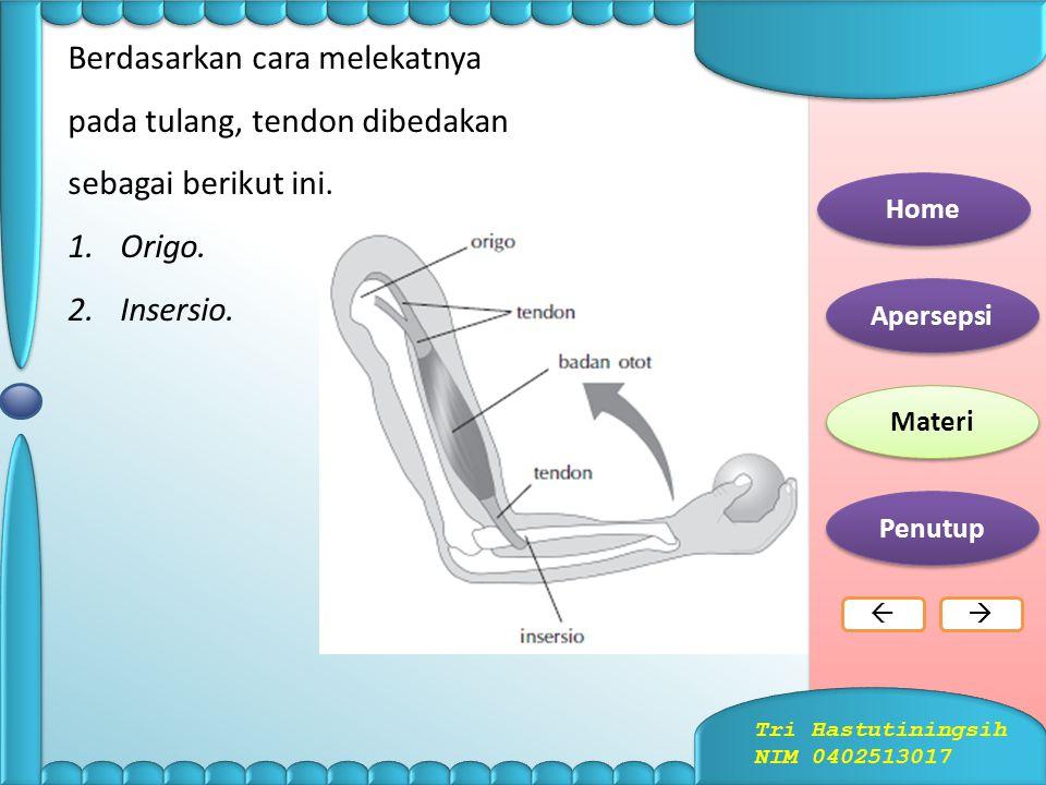 a.Otot Lurik Gberbentuk kumparan dan terdiri dari bagiabungan otot an: 1.ventrikel (empal). 2.urat otot (tendon). 1.Jenis-jenis otot Home Apersepsi Ma
