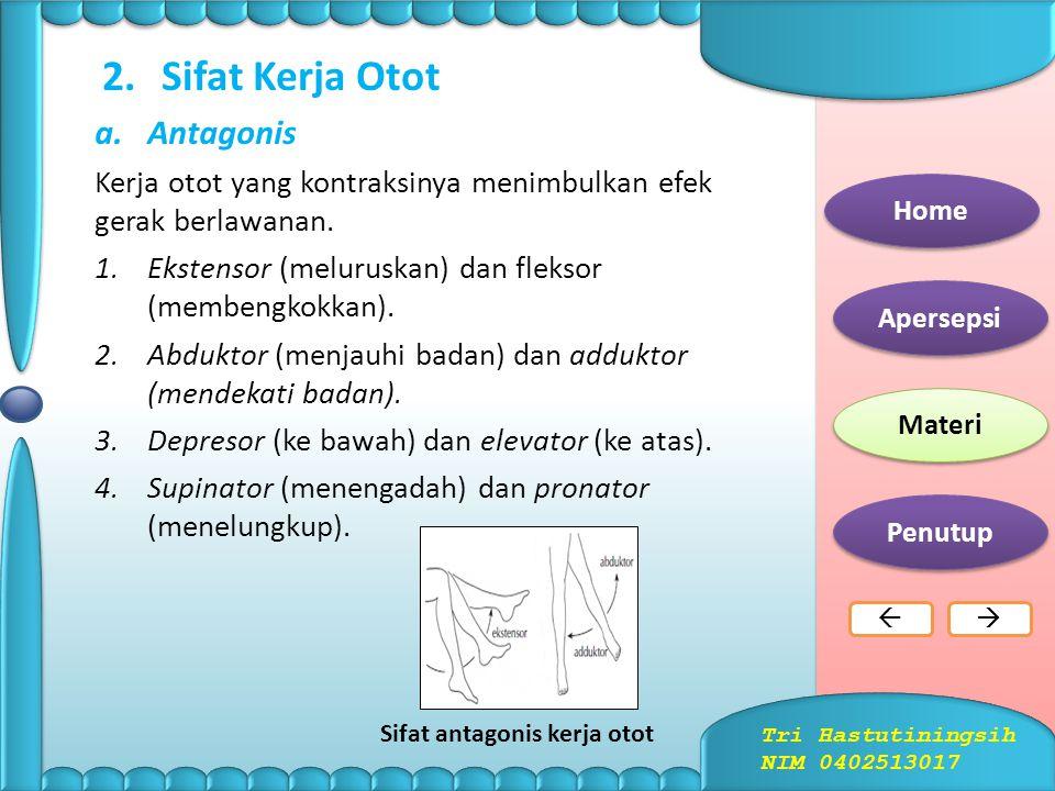 b.Otot Polos Tersusun dari sel-sel yang berbentuk kumparan halus. Otot polos terdapat di alat-alat dalam tubuh, misalnya pada: 1.dinding saluran pence