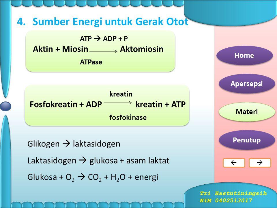 3.Mekanisme Gerak Otot Home Apersepsi Materi Penutup  Tri Hastutiningsih NIM 0402513017