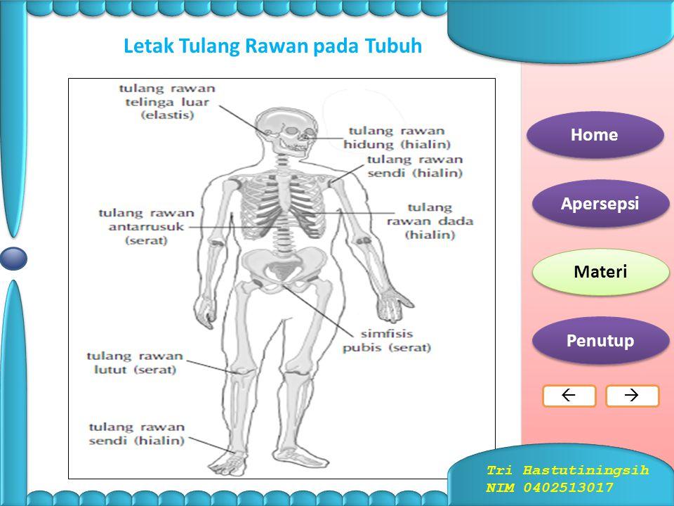 TULANG 1.Jenis Tulang a.Tulang Rawan (kartilago)  Bersifat bingkas dan lentur serta terdiri atas sel- sel rawan yang dapat menghasilkan matriks berup