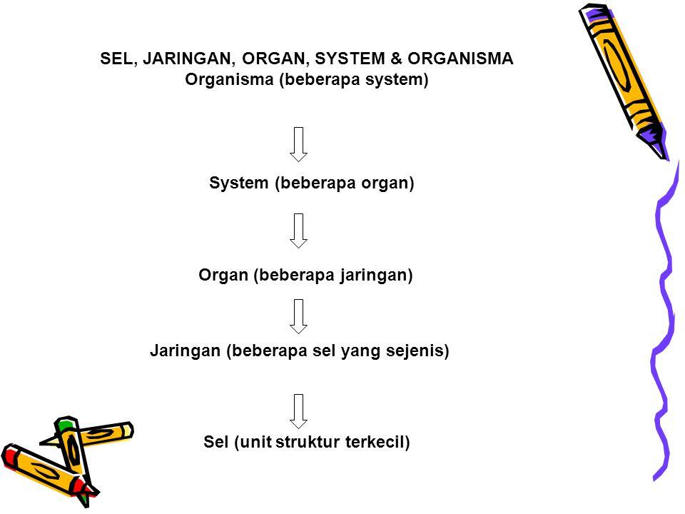 SEL, JARINGAN, ORGAN, SYSTEM & ORGANISMA Organisma (beberapa system) System (beberapa organ) Organ (beberapa jaringan) Jaringan (beberapa sel yang sej