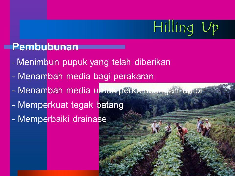 Hilling Up Pembubunan - Menimbun pupuk yang telah diberikan - Menambah media bagi perakaran - Menambah media untuk perkembangan umbi - Memperkuat tegak batang - Memperbaiki drainase