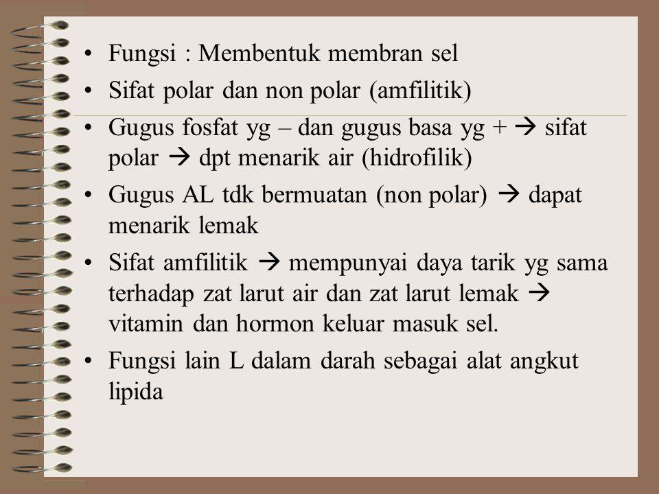 Fungsi : Membentuk membran sel Sifat polar dan non polar (amfilitik) Gugus fosfat yg – dan gugus basa yg +  sifat polar  dpt menarik air (hidrofilik
