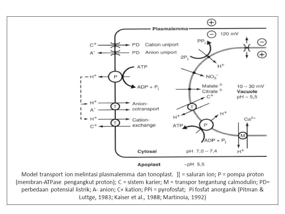 Aliran 13 NO 3 - memasuki akar tanaman: tanaman sebelumnya diperlakukan dengan 0.1 mol m -3 NO 3 - selama satu hari (O) atau 4 hari ( Δ ); atau dengan 10 mol m -3 NO 3 - selama empat hari ( □ ).