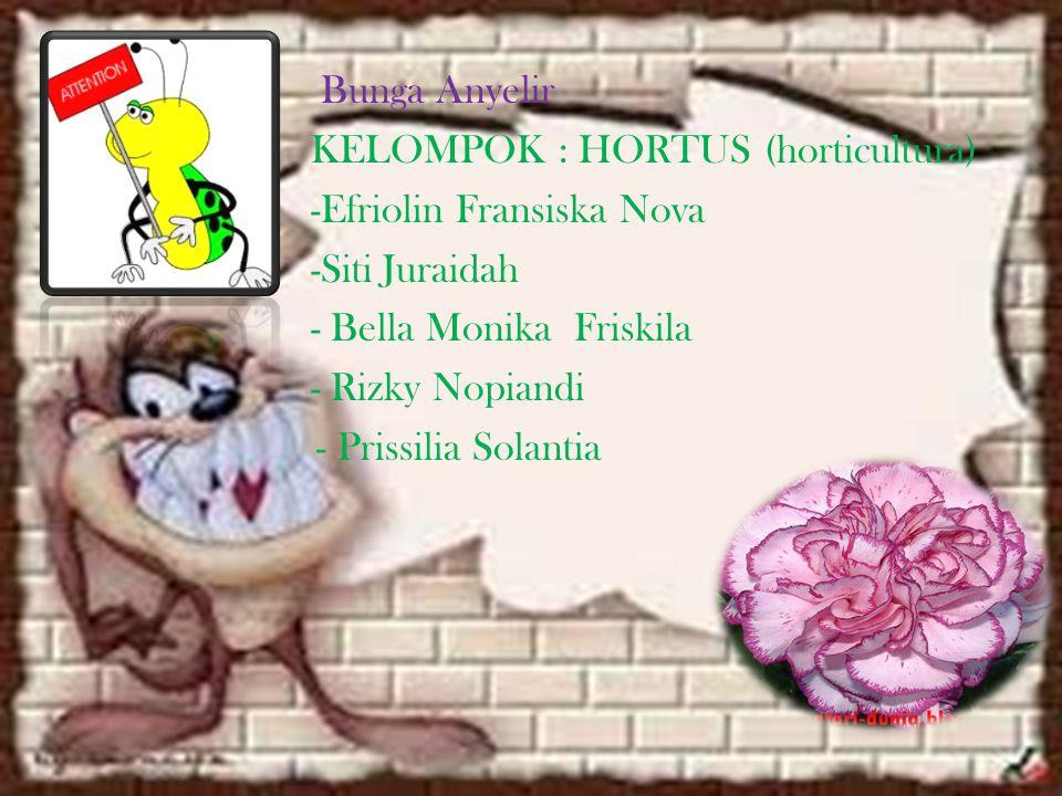 Bunga Anyelir KELOMPOK : HORTUS (horticultura) -Efriolin Fransiska Nova -Siti Juraidah - Bella Monika Friskila - Rizky Nopiandi - Prissilia Solantia
