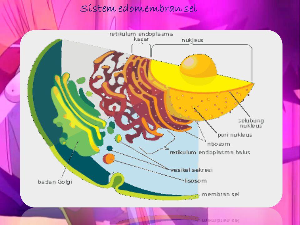 Sistem edomembran sel