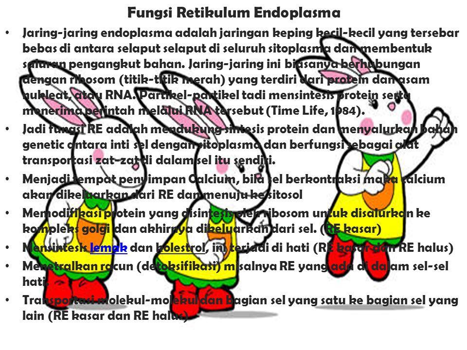 Fungsi Retikulum Endoplasma Jaring-jaring endoplasma adalah jaringan keping kecil-kecil yang tersebar bebas di antara selaput selaput di seluruh sitoplasma dan membentuk saluran pengangkut bahan.