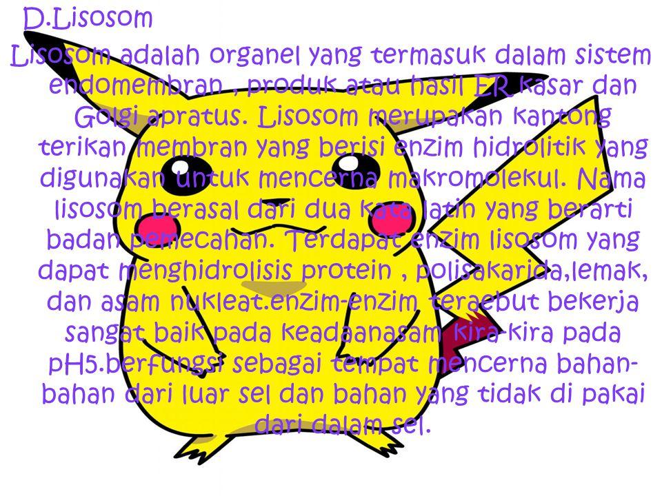 D.Lisosom Lisosom adalah organel yang termasuk dalam sistem endomembran, produk atau hasil ER kasar dan Golgi apratus. Lisosom merupakan kantong terik