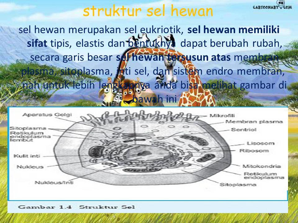 Sel Hewan terdiri atas: Membran Plasma, Retikulum Endoplasma (RE) (RE halus (REH) dan RE kasar (REK)), Badan Golgi, Lisosom, Mitokondria, Sentrosom, Inti atau Nukleus, Mikrotubulus, Mikrofilamen, ribosom, sentriol,, badan mikro( sentrosom)
