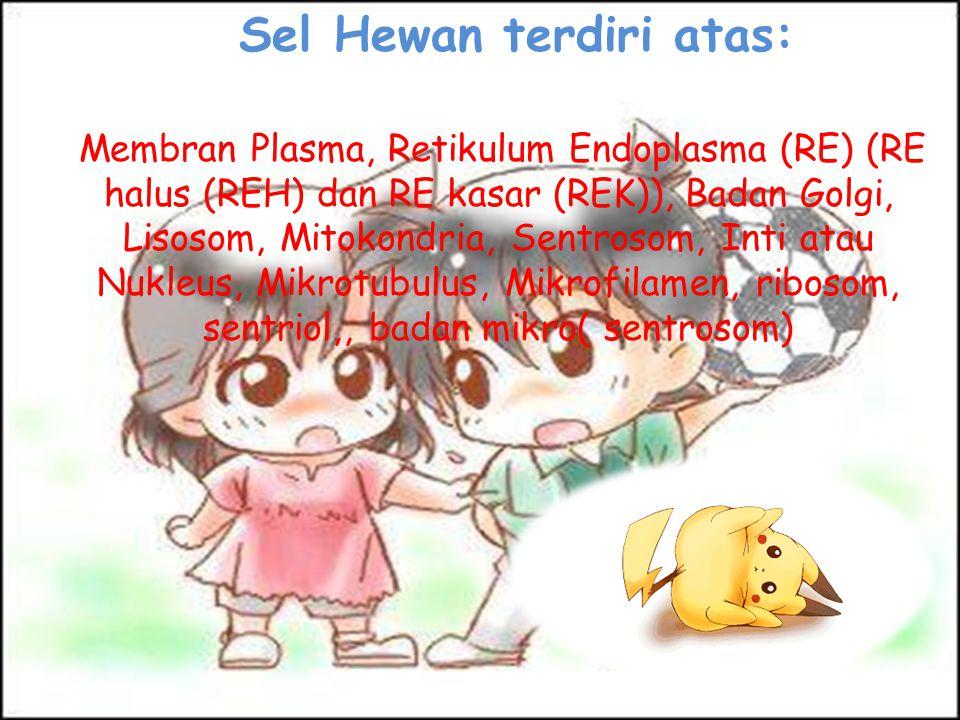 Sel Hewan terdiri atas: Membran Plasma, Retikulum Endoplasma (RE) (RE halus (REH) dan RE kasar (REK)), Badan Golgi, Lisosom, Mitokondria, Sentrosom, I
