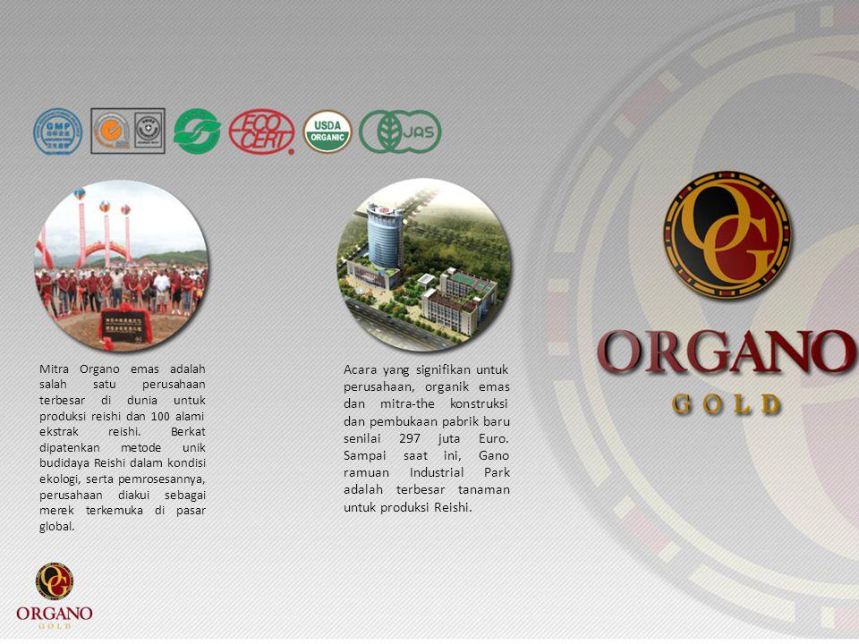 Mitra Organo emas adalah salah satu perusahaan terbesar di dunia untuk produksi reishi dan 100 alami ekstrak reishi. Berkat dipatenkan metode unik bud