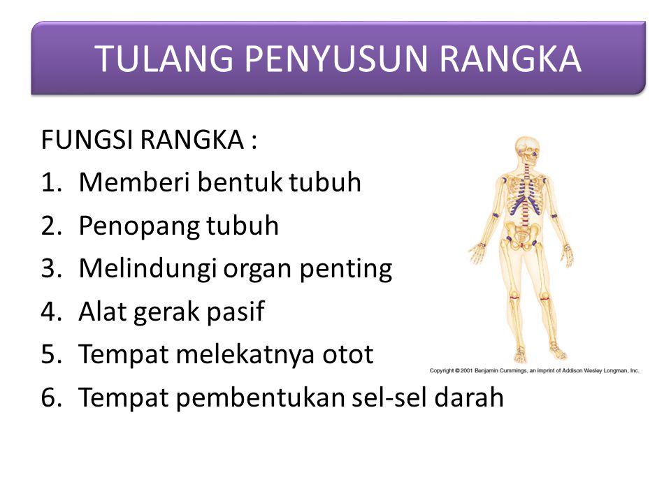 FUNGSI RANGKA : 1.Memberi bentuk tubuh 2.Penopang tubuh 3.Melindungi organ penting 4.Alat gerak pasif 5.Tempat melekatnya otot 6.Tempat pembentukan se