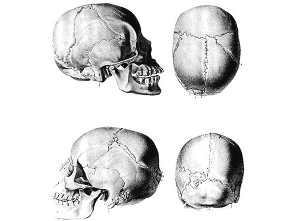 ANGGOTA BADAN Tulang belakang (vertebrae) Tulang dada Tulang rusuk Tulang Gelang panggul Tulang Gelang panggul