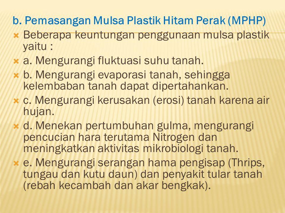 b. Pemasangan Mulsa Plastik Hitam Perak (MPHP)  Beberapa keuntungan penggunaan mulsa plastik yaitu :  a. Mengurangi fluktuasi suhu tanah.  b. Mengu