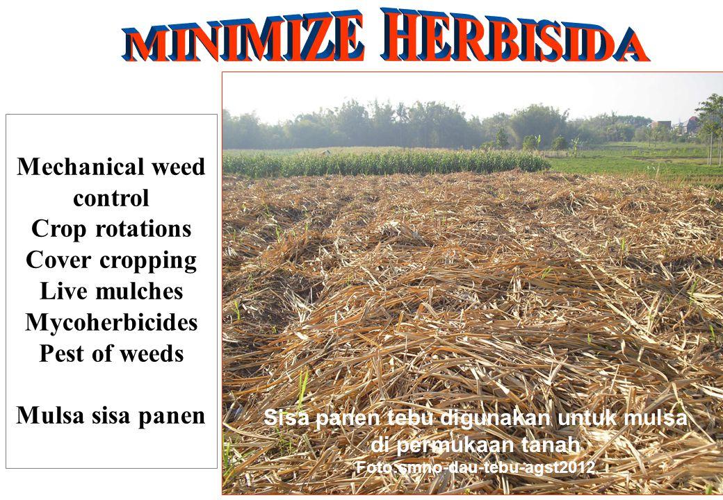 Mechanical weed control Crop rotations Cover cropping Live mulches Mycoherbicides Pest of weeds Mulsa sisa panen Sisa panen tebu digunakan untuk mulsa di permukaan tanah Foto:smno-dau-tebu-agst2012