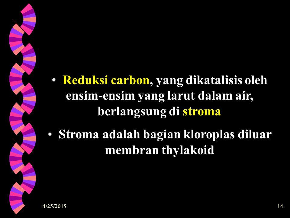 4/25/201514 Reduksi carbon, yang dikatalisis oleh ensim-ensim yang larut dalam air, berlangsung di stroma Stroma adalah bagian kloroplas diluar membra