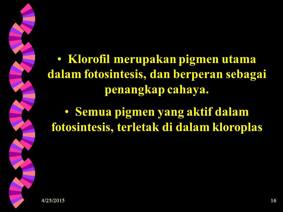 4/25/201516 Klorofil merupakan pigmen utama dalam fotosintesis, dan berperan sebagai penangkap cahaya. Semua pigmen yang aktif dalam fotosintesis, ter