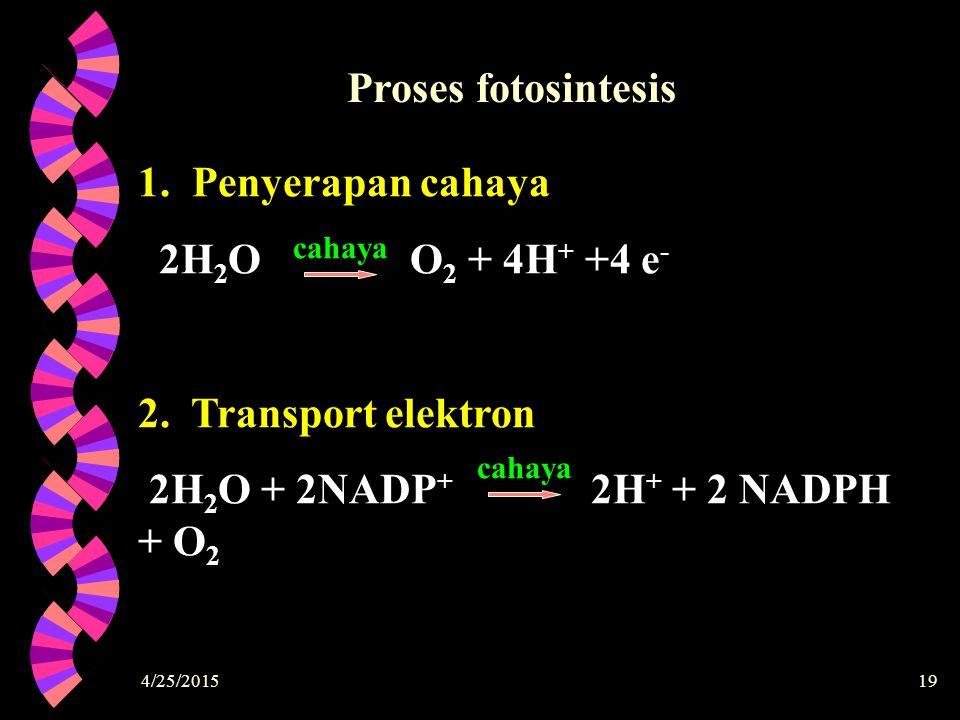 4/25/201519 1. Penyerapan cahaya 2H 2 O O 2 + 4H + +4 e - 2. Transport elektron 2H 2 O + 2NADP + 2H + + 2 NADPH + O 2 cahaya Proses fotosintesis