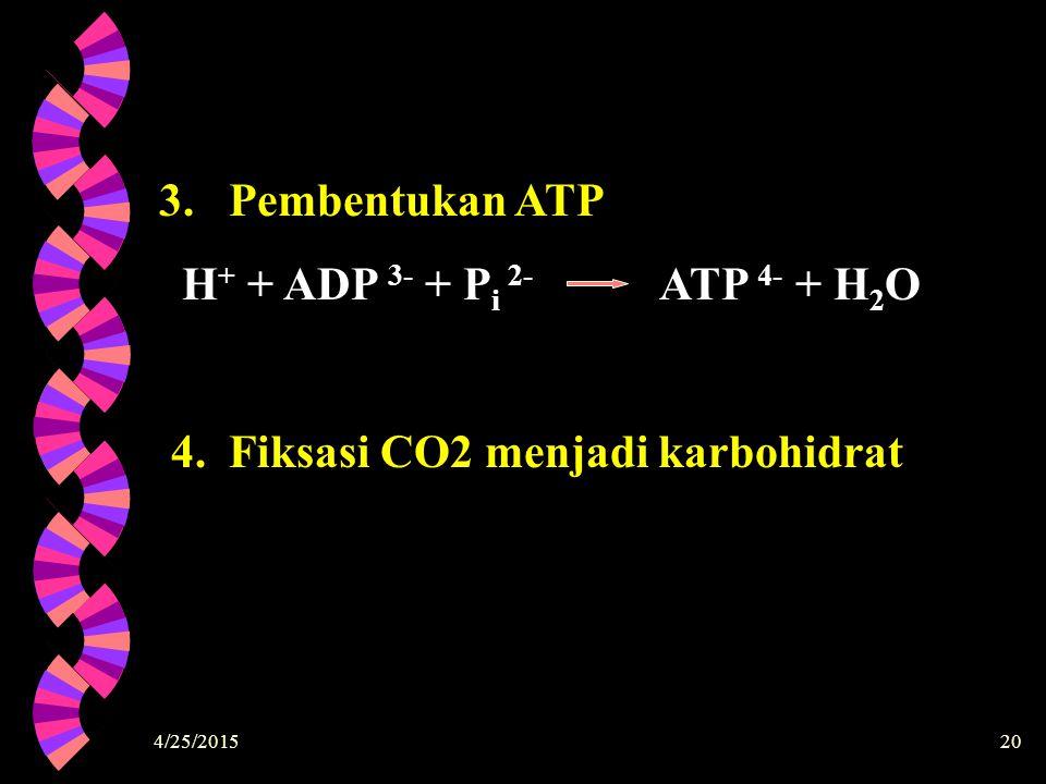 4/25/201520 3. Pembentukan ATP H + + ADP 3- + P i 2- ATP 4- + H 2 O 4. Fiksasi CO2 menjadi karbohidrat