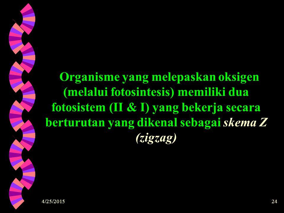 4/25/201524 Organisme yang melepaskan oksigen (melalui fotosintesis) memiliki dua fotosistem (II & I) yang bekerja secara berturutan yang dikenal seba