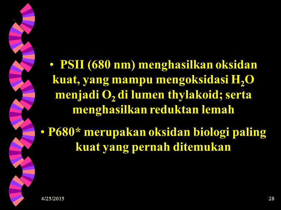 4/25/201528 PSII (680 nm) menghasilkan oksidan kuat, yang mampu mengoksidasi H2OH2O menjadi O 2 di lumen thylakoid; serta menghasilkan reduktan lemah