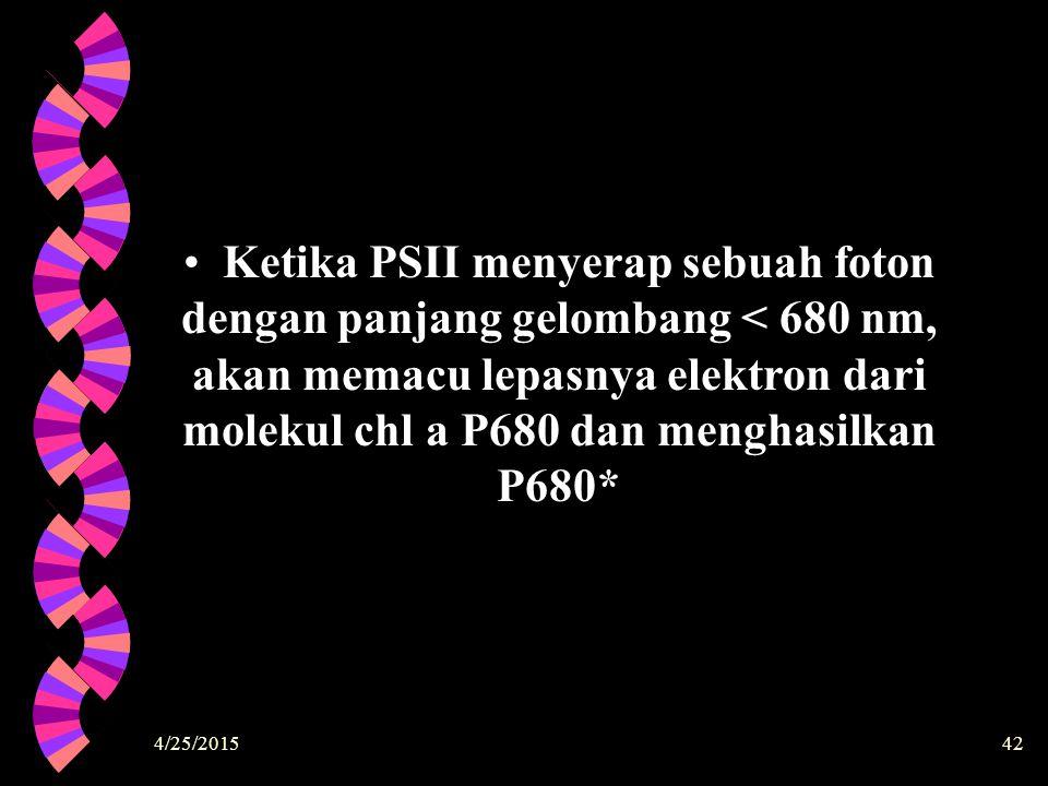 4/25/201542 Ketika PSII menyerap sebuah foton dengan panjang gelombang < 680 nm, akan memacu lepasnya elektron dari molekul chl a P680 dan menghasilka