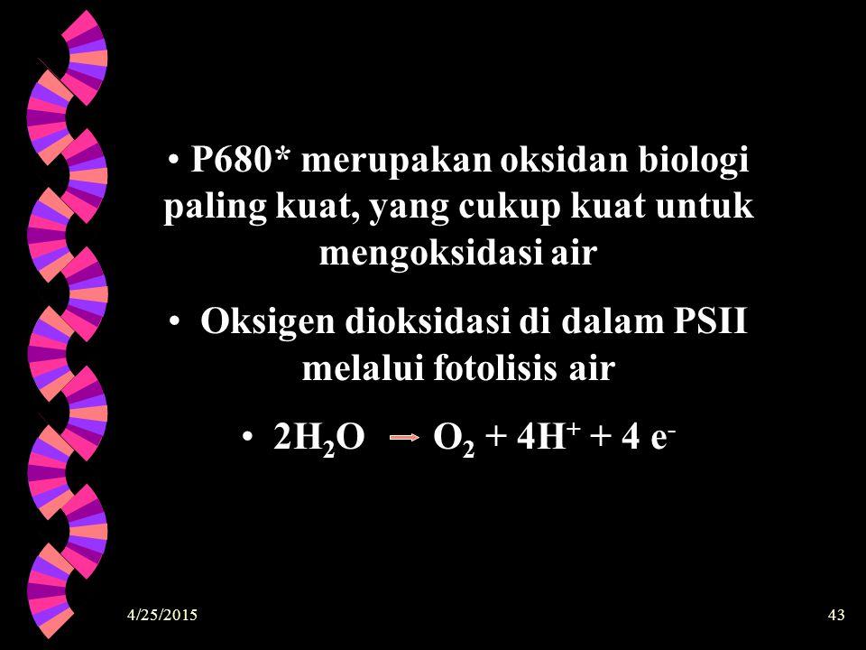 4/25/201543 P680* merupakan oksidan biologi paling kuat, yang cukup kuat untuk mengoksidasi air Oksigen dioksidasi di dalam PSII melalui fotolisis air