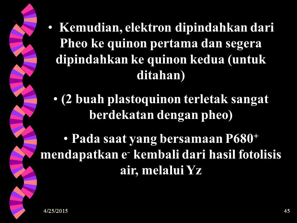 4/25/201545 Kemudian, elektron dipindahkan dari Pheo ke quinon pertama dan segera dipindahkan ke quinon kedua (untuk ditahan) (2 buah plastoquinon ter